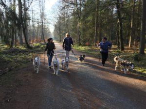 Hundetraining Kreis Segeberg - Karen Frick - Workshops - Walken mit Hund
