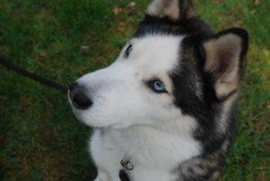 Hundetraining Kreis Segeberg - Karen Frick - Erfahrungen und Zertifikate