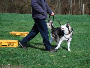 Hundetraining Kreis Segeberg - Karen Frick - Einzeltraining